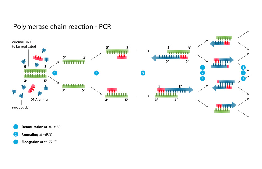 Polymerase-chain-reaction